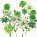 White Scabious & Green Chrysanthemum Art Print