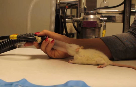 Animal clinical experience sharing | Simple rat respiratory anesthesia protocol