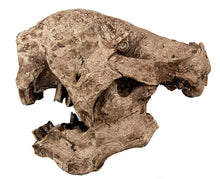 Load image into Gallery viewer, Megalonyx Ground Sloth skull cast replica #1