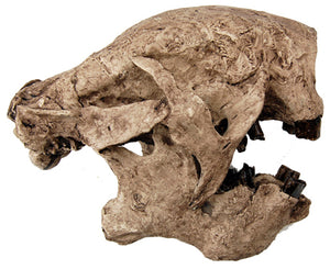Megalonyx Ground Sloth skull cast replica #1