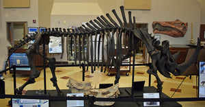 Woolly Rhino skeleton cast replica 2