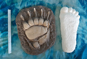 Grizzly Bear footprint track cast replica