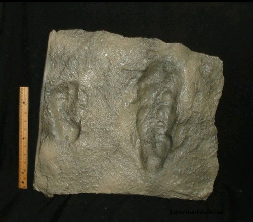 Laetoli Hominid Footprint tracks impression casts