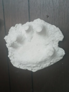 1994 Bigfoot Hand cast #3 Bigfoot (Sasquatch) Freeman handprint cast