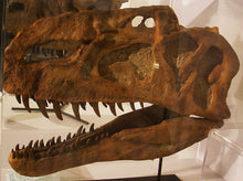 Load image into Gallery viewer, Monolophosaurus dinosaur skull cast replica #1
