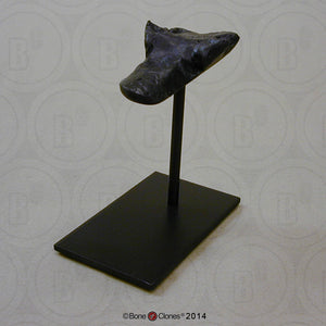 Display Stand (S-BC-132) for Cave Bear skull cast replica