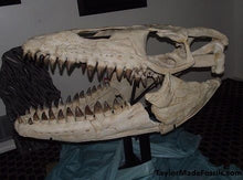 Load image into Gallery viewer, Mosasaurus Skull cast replica Prognathon with stand