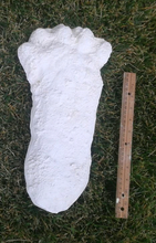 "Load image into Gallery viewer, 1963 Hyampom Bigfoot (Sasquatch) footprint cast ""B"""