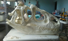 Load image into Gallery viewer, Allosaurus skull (unpainted / untrimmed)