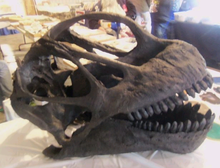 Load image into Gallery viewer, Camarasaurus skull cast replica #2