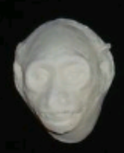 Load image into Gallery viewer, Babboon (Papio ursinus), female death cast replica Life cast