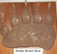 Load image into Gallery viewer, Brown Bear (Alaska) Ursus Arctos footprint cast