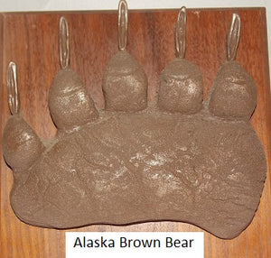 Brown Bear (Alaska) Ursus Arctos footprint cast