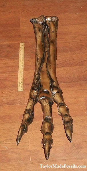 Albertosaurus Foot cast replica reproduction dinosaur fossil cast Gorgosaurus Taylor Made Fossils