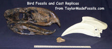 Load image into Gallery viewer, Archaeopteryx skull cast replica recreation