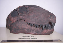 Load image into Gallery viewer, Dimetrodon skull cast replica #1