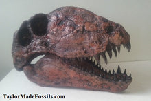 Load image into Gallery viewer, Copy of Dimetrodon limbatus skull cast replica #2