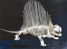 Load image into Gallery viewer, Dimetrodon skeleton cast replica 2 BYU Specimen