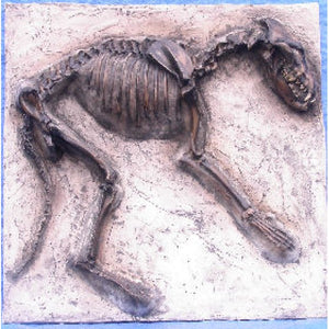 Dire Wolf Dig Panel Canis Dirus Cast Replica Reproduction