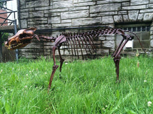 Load image into Gallery viewer, Dire Wolf Skeleton cast replica  cast replica reproduction Taylor Made Fossils