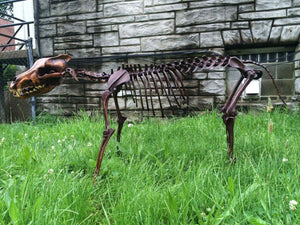 Dire Wolf Skeleton cast replica  cast replica reproduction Taylor Made Fossils
