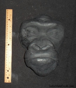 Gorilla life cast #1 Gorilla death cast  life mask