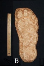 "Load image into Gallery viewer, 1982 Grays Harbor Hereford Bigfoot print cast ""B"""