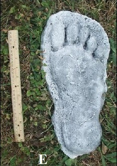 1982 Grays Harbor Hereford Bigfoot print cast