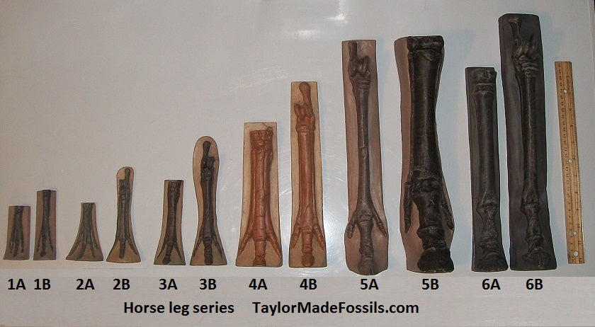 Horse legs and hooves cast replicas (Teaching quality) Unpainted