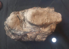 Load image into Gallery viewer, Velociraptor egg nest Dinosaur fossil egg cast for sale Replica Dinosaur Reproductions