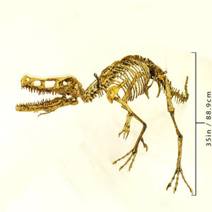 Velociraptor skeleton cast replica