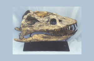 Plesiosaurus Skull cast replica for sale