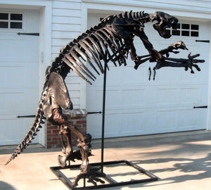 Megalonyx ground sloth skeleton cast replica
