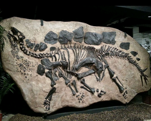 Stegosaurus skeleton dig panel