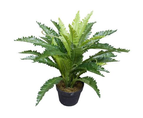 Artificial Birds Nest Fern 55cm | 360HomeWare
