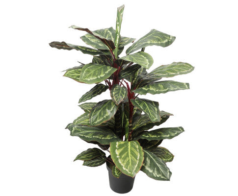 Artificial Wide Leaf Cordyline Plant 90cm | 360HomeWare
