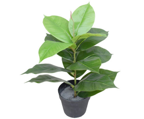 Artificial Potted Rubber Plant 55cm | 360HomeWare