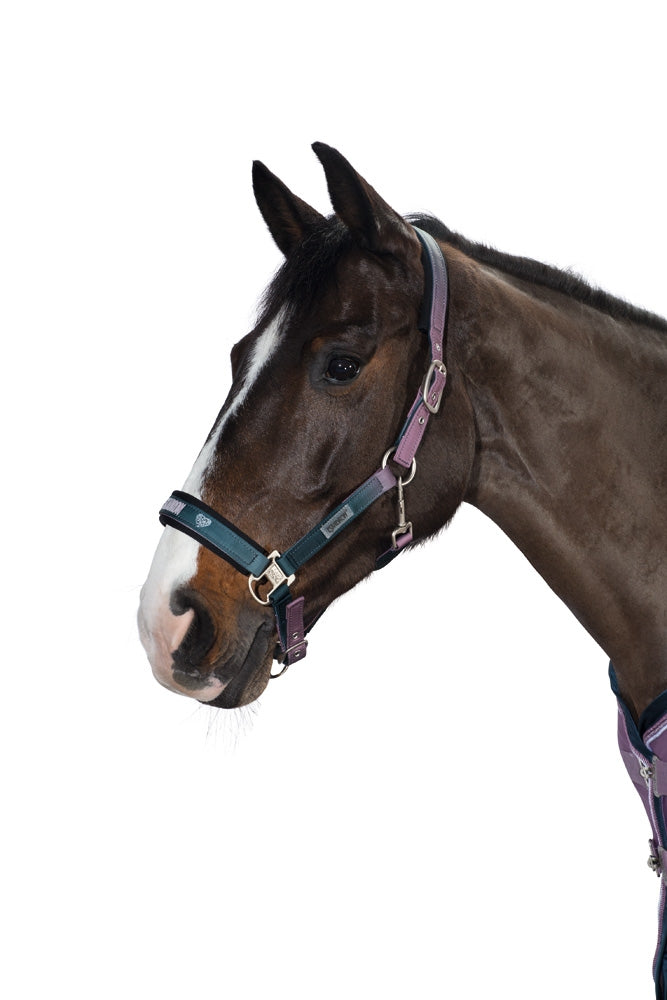 Eskadron SS18 NG Fade Headcollar & Leadrope - Smoking Purple/Ink Blue