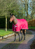 Bucas Freedom 300g Heavyweight Stable Rug - Persian Red