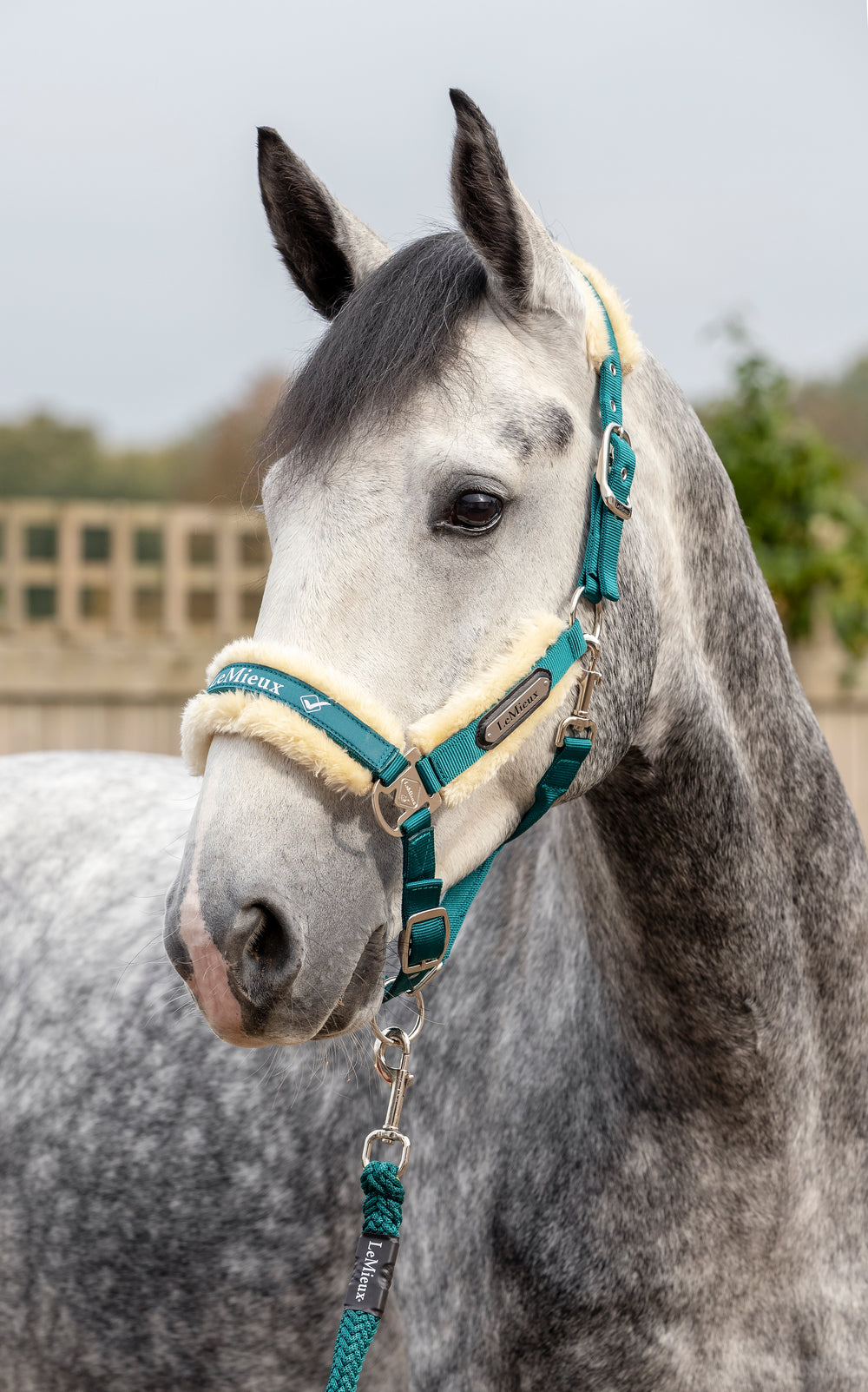 LeMieux Loire Luxury Padded Headcollar & Leadrope - Peacock
