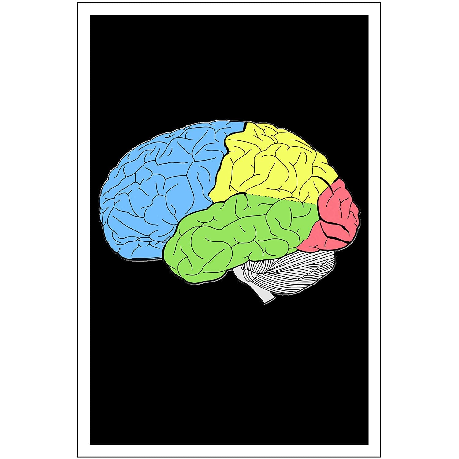 "Spitzy's Lobes of Human Brain Anatomy Science Teacher Poster (12"" x 18"" Includes White .5"" White Border)"