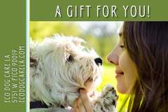 e-Gift Card image of a white woman nuzzling a westie dog