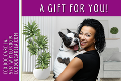 eGift Card with a woman of color cuddling with her black/white frenchie