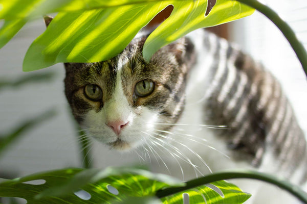 Monstera and Cat