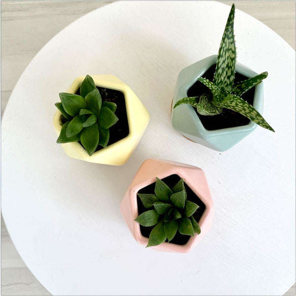 Pastel Colored Pentagon Ceramic Pots