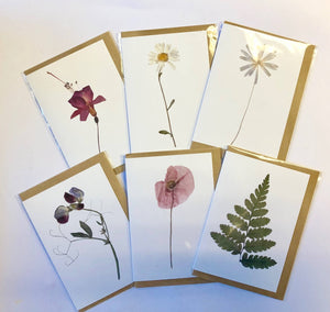 Pressed Flower cards 6pk