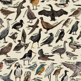 The Birds of Ireland - Hand-illustrated Diagram of Irish wildlife - The Biscuit Marketplace