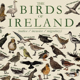 The Birds of Ireland - Hand-illustrated Diagram of Irish wildlife