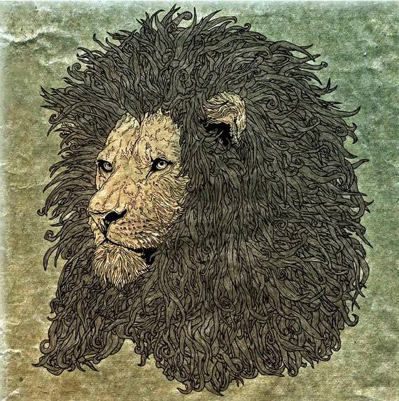 African Lion's Mane - Illustration Print - The Biscuit Marketplace