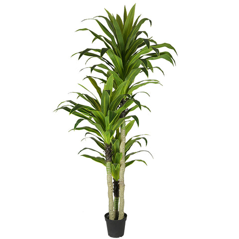 Tall Real Faux Plastic House Plant - FOB:US$ - MOQ: